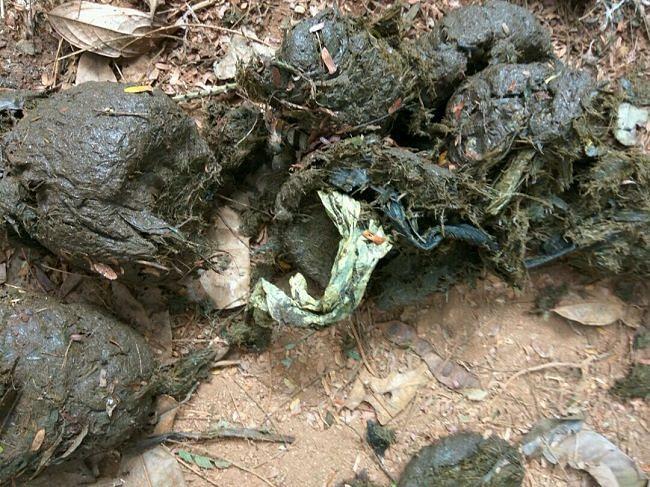 Non biodegradable waste.