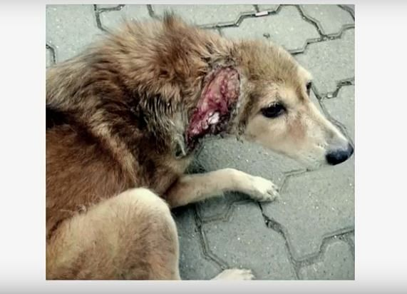 #AdoptTheBanner: Don't Know How to Help Stray Dogs? Start Here