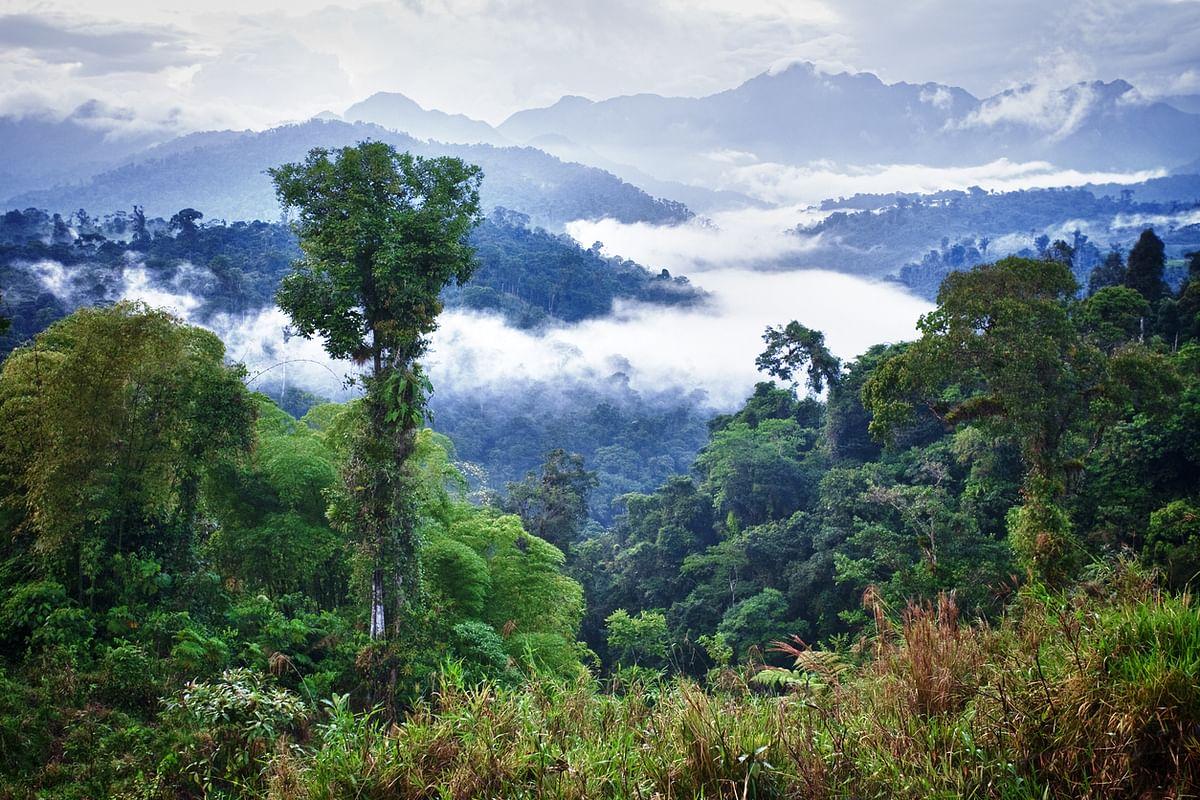 Ecuador Rainforest.