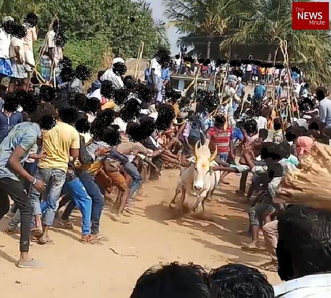 Deliberate cruelty, injury, and deaths are inherent in Jallikattu, says PETA India CEO Dr Manilal Valliyate.