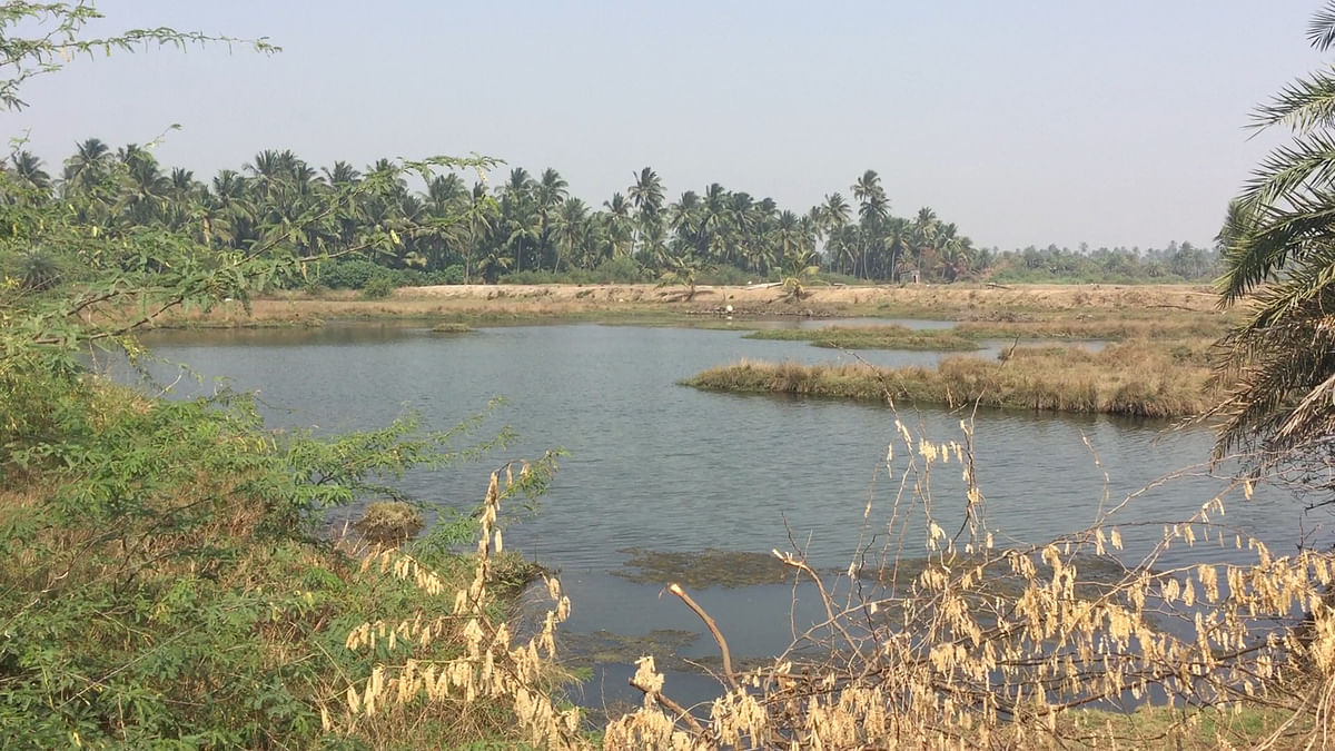 Find Sustainable Solutions, Don't Cut Mangroves: Vasai Residents
