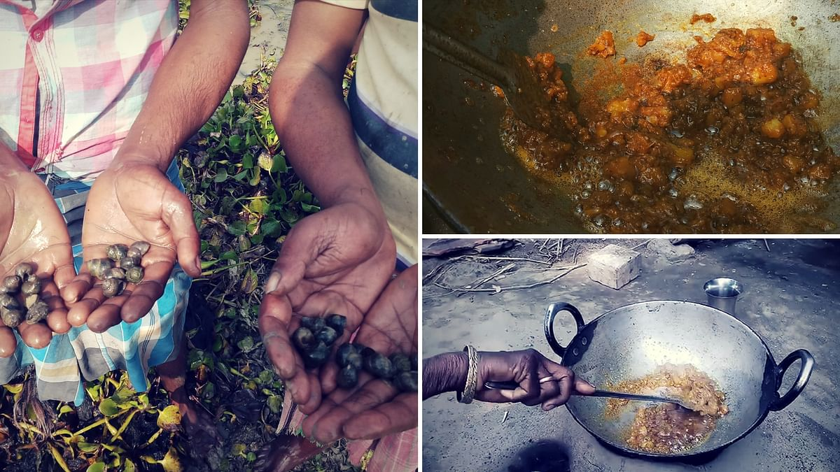 Googli is widely considered unpalatable for communities in urban localities.