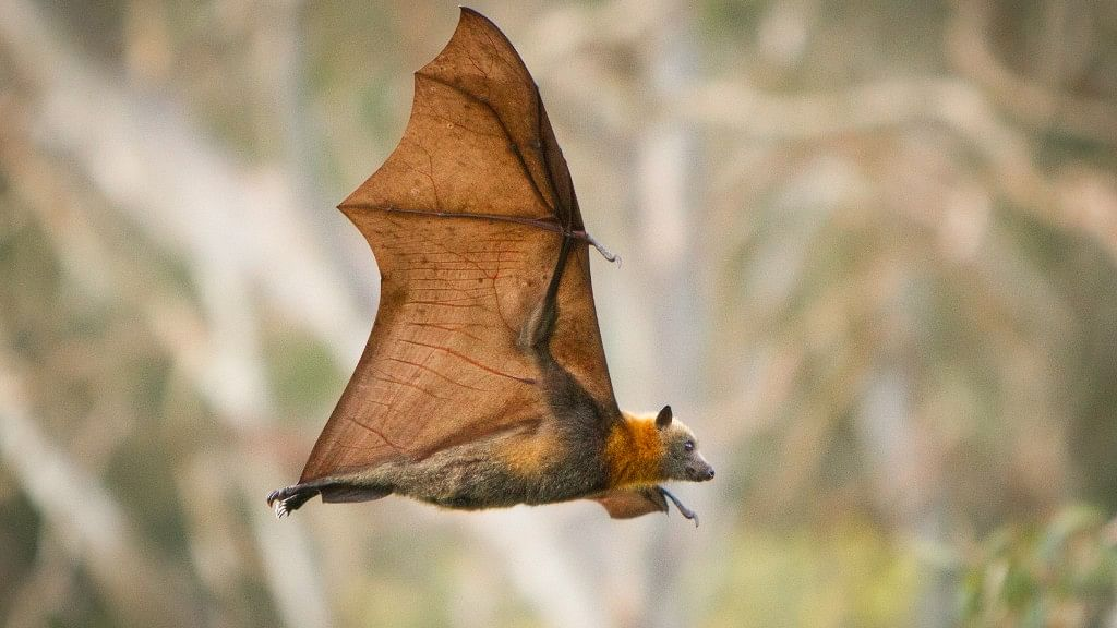 Climate Change: A Possible Cause Behind the Nipah Outbreak