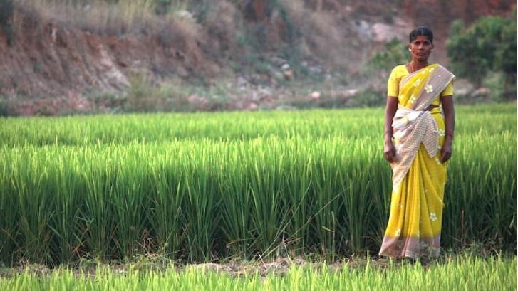 Valliammal, who manages a rain-fed farm in Dharmapuri district of Tamil Nadu, grew rice for the first time in three years.