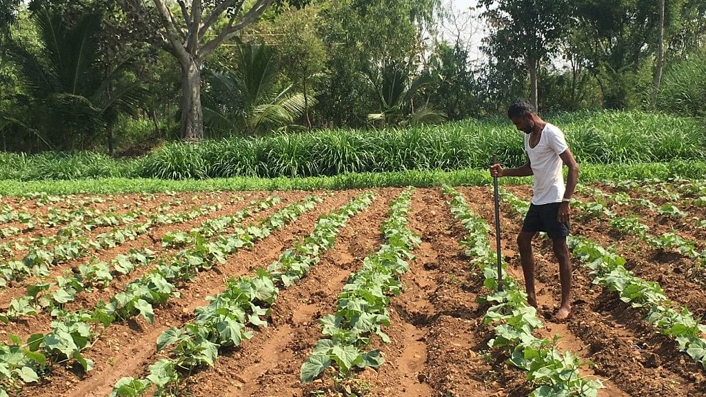 What Is the Farmers' Pulse This Karnataka Elections?