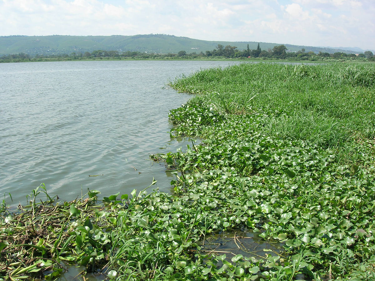 Last year, Pallavaram municipality had claimed that water body on the one side of link road was not Putheri lake.