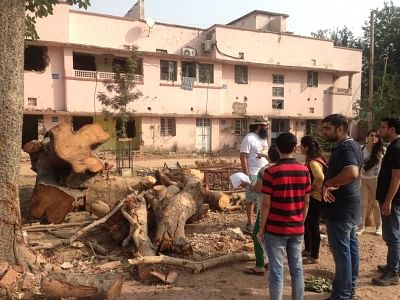 Residents of South Delhi standing next to the trees chopped for construction.