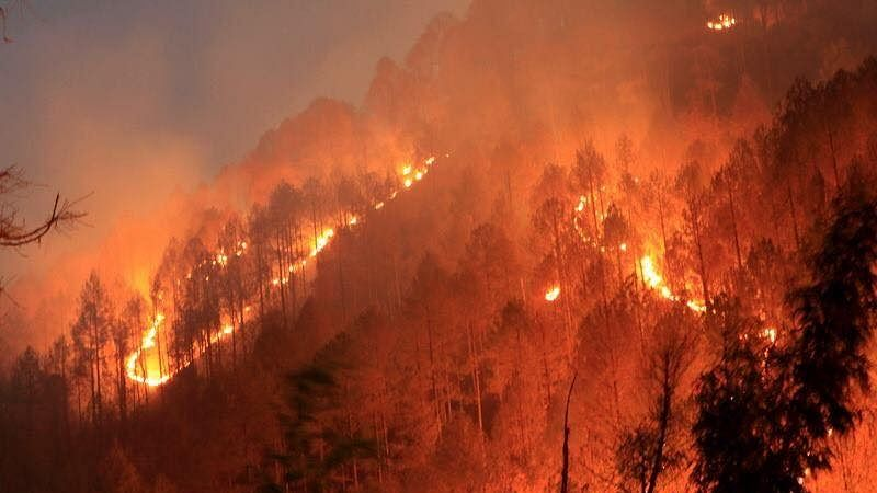 Forest Fires Rises 158% In 6 Years; Warming A Factor, Experts