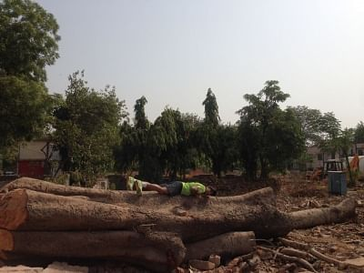 A  man protests with a tree already chopped in Delhi. About 16,500 more trees are scheduled to be cut.