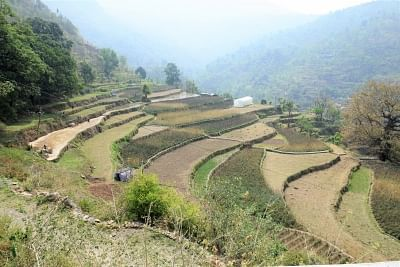Step farms of Tipli, now revive are used for variety of crops.