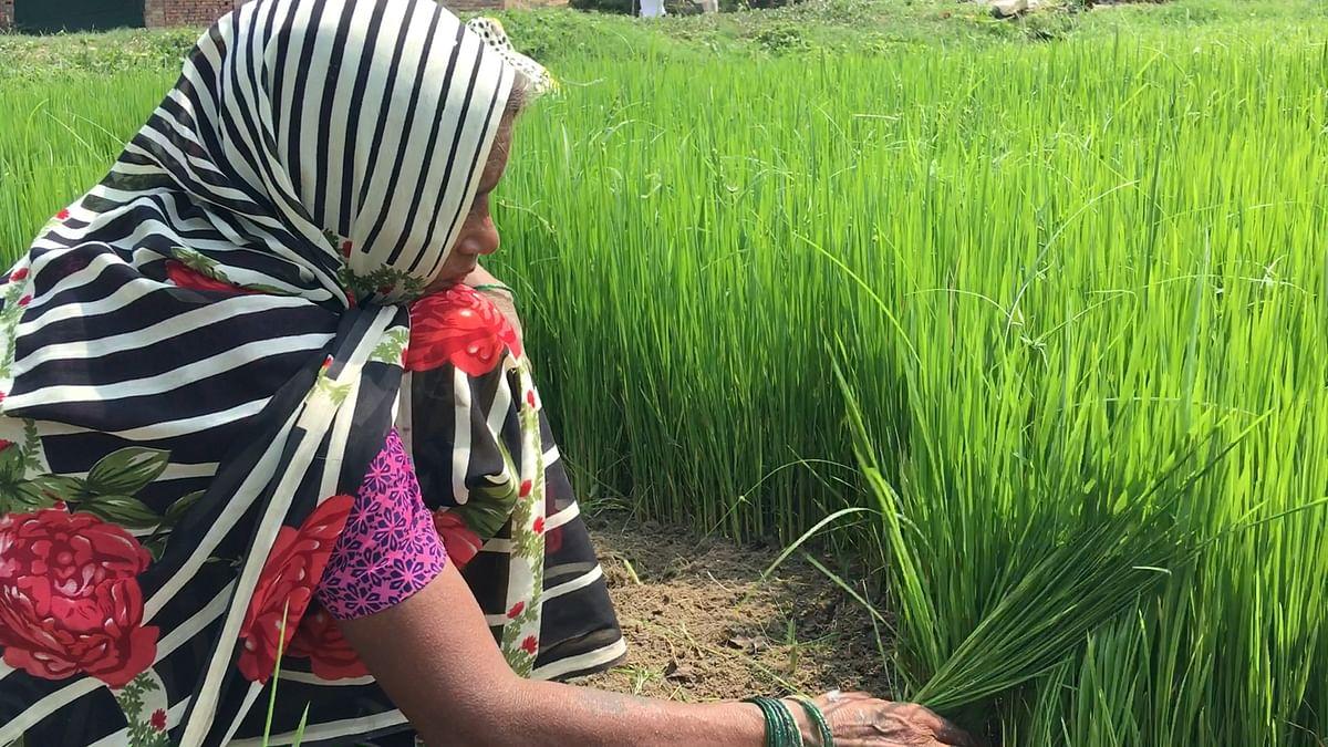 Why Are Farmers Unhappy Despite the Rise in MSP?