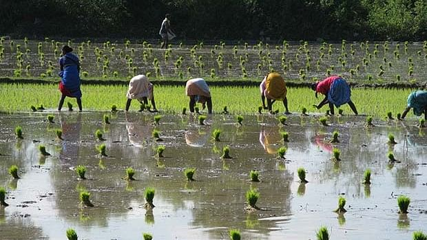 Rice consumes the most water per tonne of output while delivering the least nutrients.