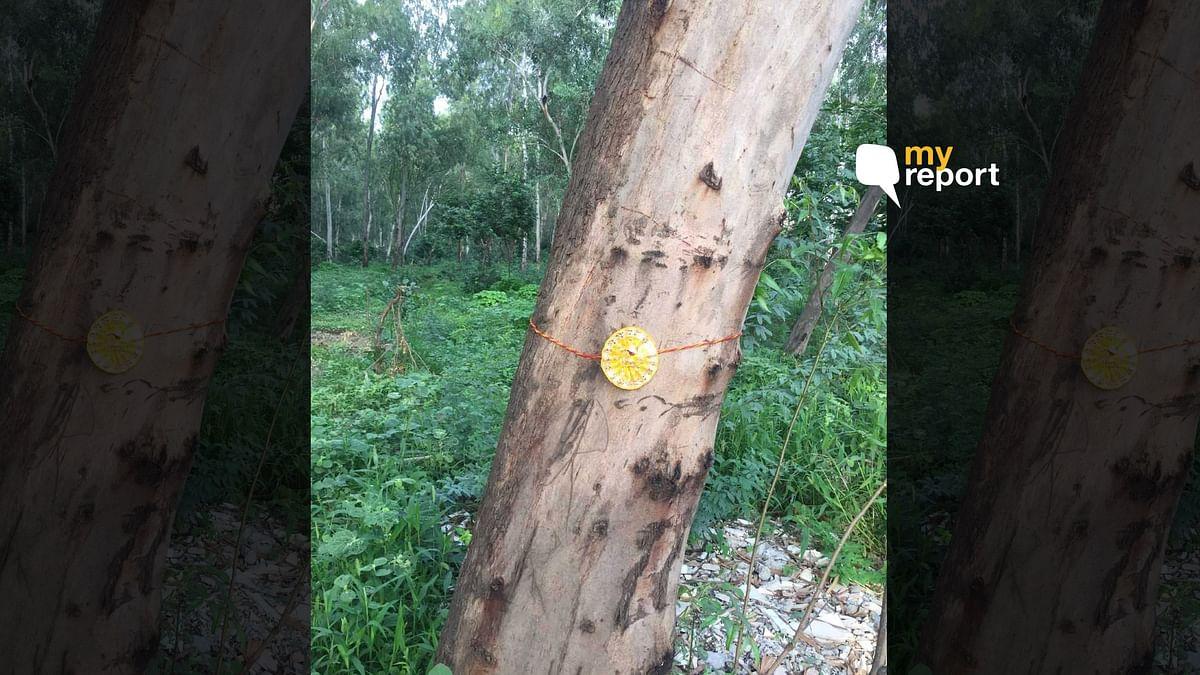 Noida Residents Say No to Eco-Park, Tie Rakhis to Save Trees