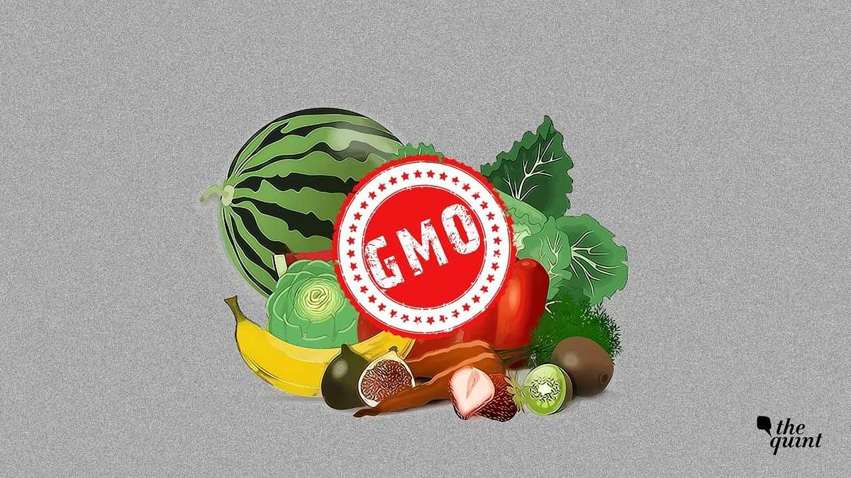 Representational image for food containing Genetically Modified Organisms