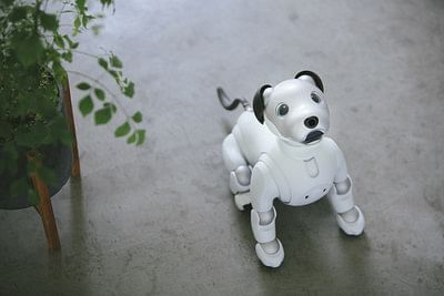 Want a dog that doesn't need caring? Sony has you covered with its Aibo dog robot.