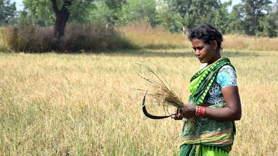 Women Farmers Suffer Due To Unequal Land Rights