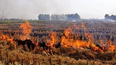Punjab Appoints 8,500 Nodal Officers to Monitor Stubble Burning