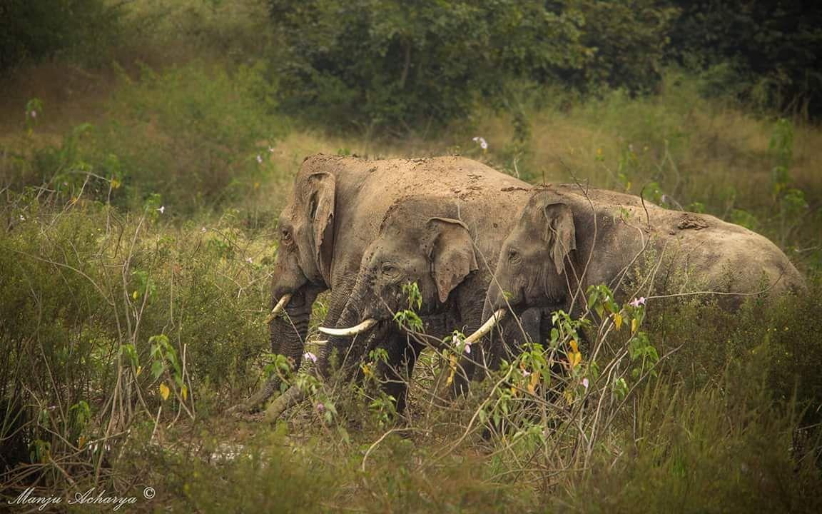 The Tusker gang led by Ranga.