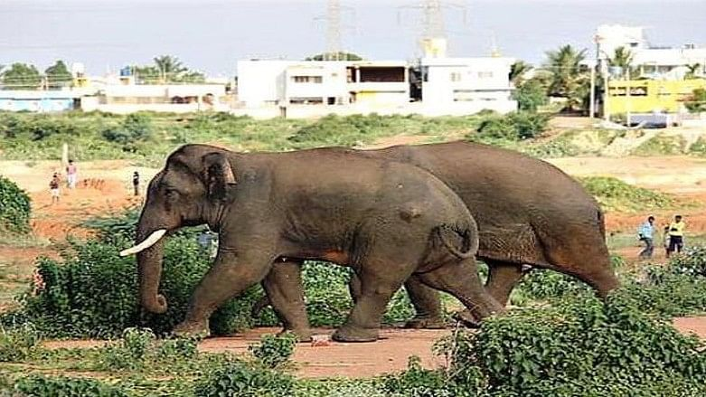 A file photo of Ranga (in front) and Sidda making their way through a village.