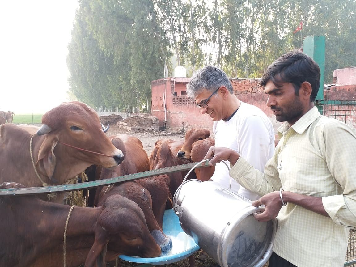 Cows are fed organically grown fodder.