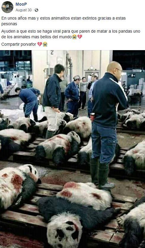#WebQoof: Images Showing Dozens of Dead Pandas is Fake