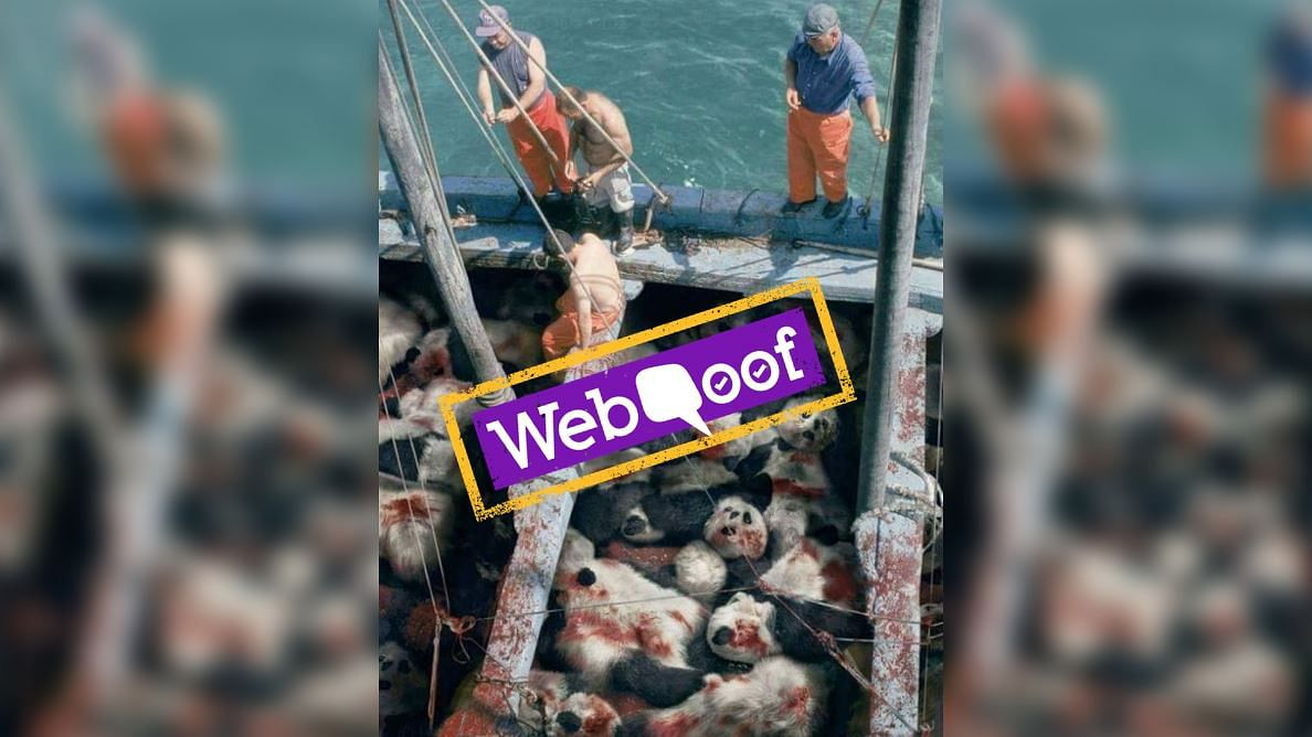 #WebQoof: Images Showing Dozens of Dead Pandas is Fake