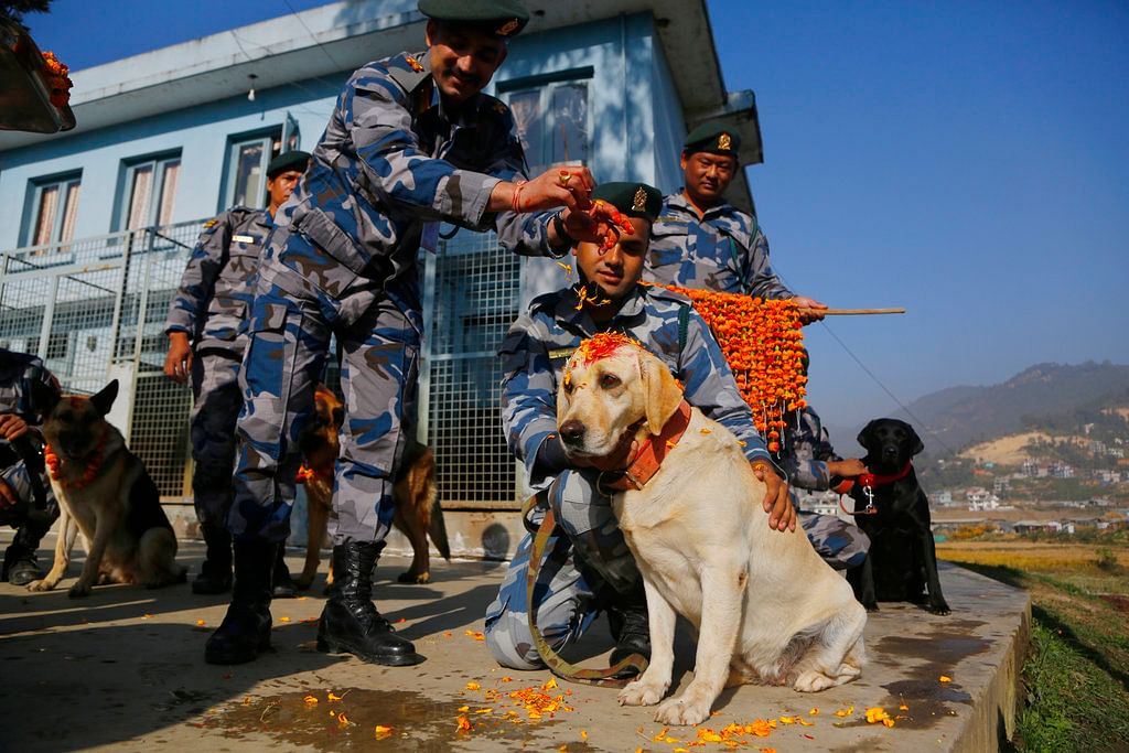 Nepal's Armed Police Force personnel garland a police dog after putting vermillion powder on its forehead during Tihar festival celebrations at a kennel division in Kathmandu, Nepal. Dogs are worshipped to acknowledge their role in providing security during the second day of Tihar festival.