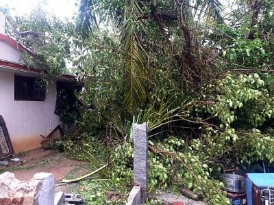 Pudukkottai: A view after Gaja cyclone hits Tamil Nadu