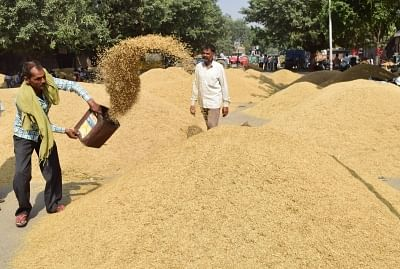 Agrarian states Punjab and Haryana have procured over 215.65 lakh tonne of paddy this kharif season, food and supplies officials said on Wednesday. (Photo: IANS)
