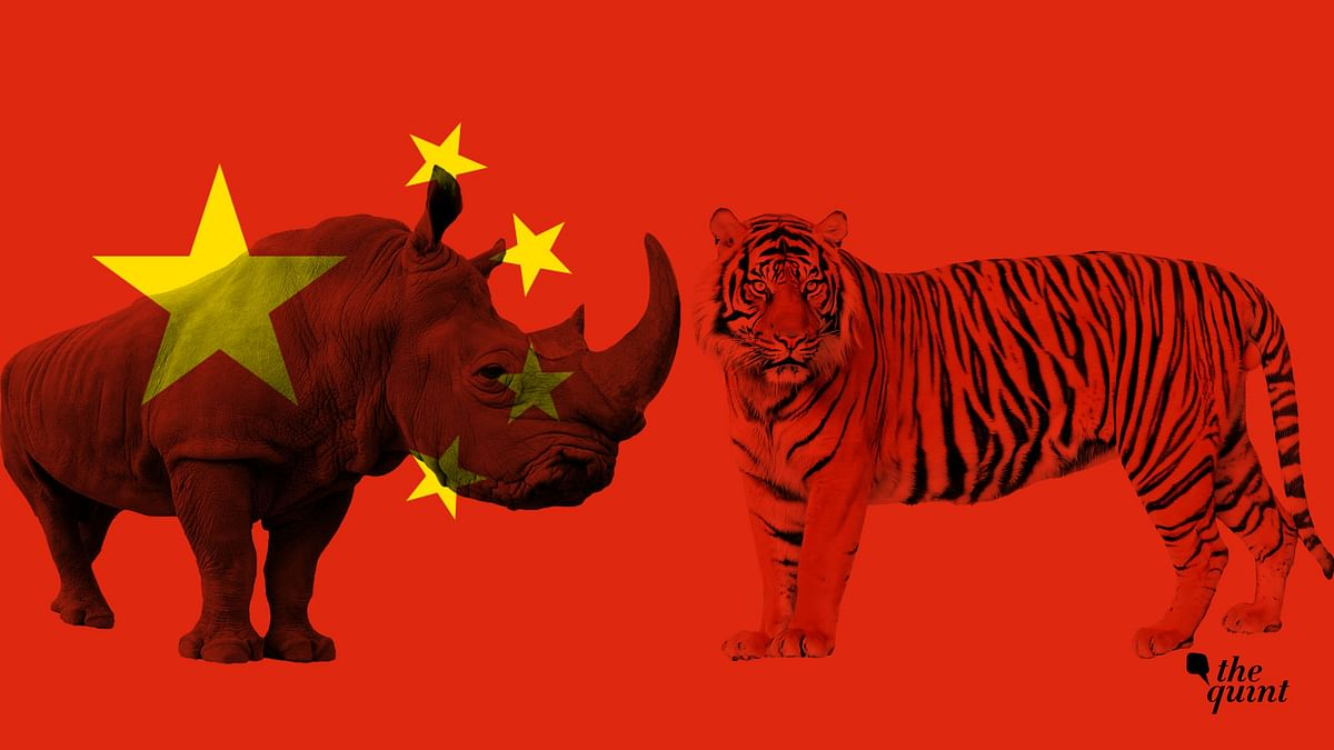 India's Tigers & Rhinos 'Under Threat' After China Revokes Ban