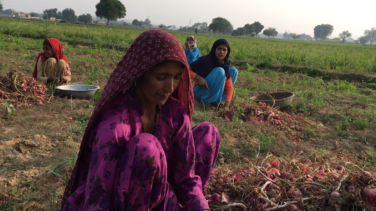 'No Gas Cylinders, No Toilets': Women Farmers in Mancha, Rajasthan