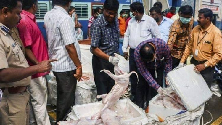 Rotten Meat Found at Chennai Station is Not Dog Meat: Officials