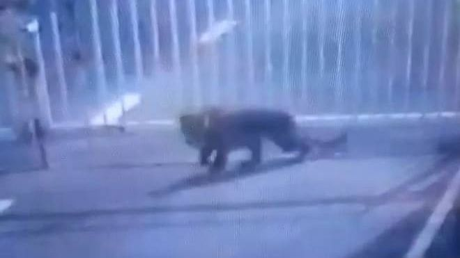 Leopard Sneaks Into Gujarat Sachivalaya, Captured After 12 hours