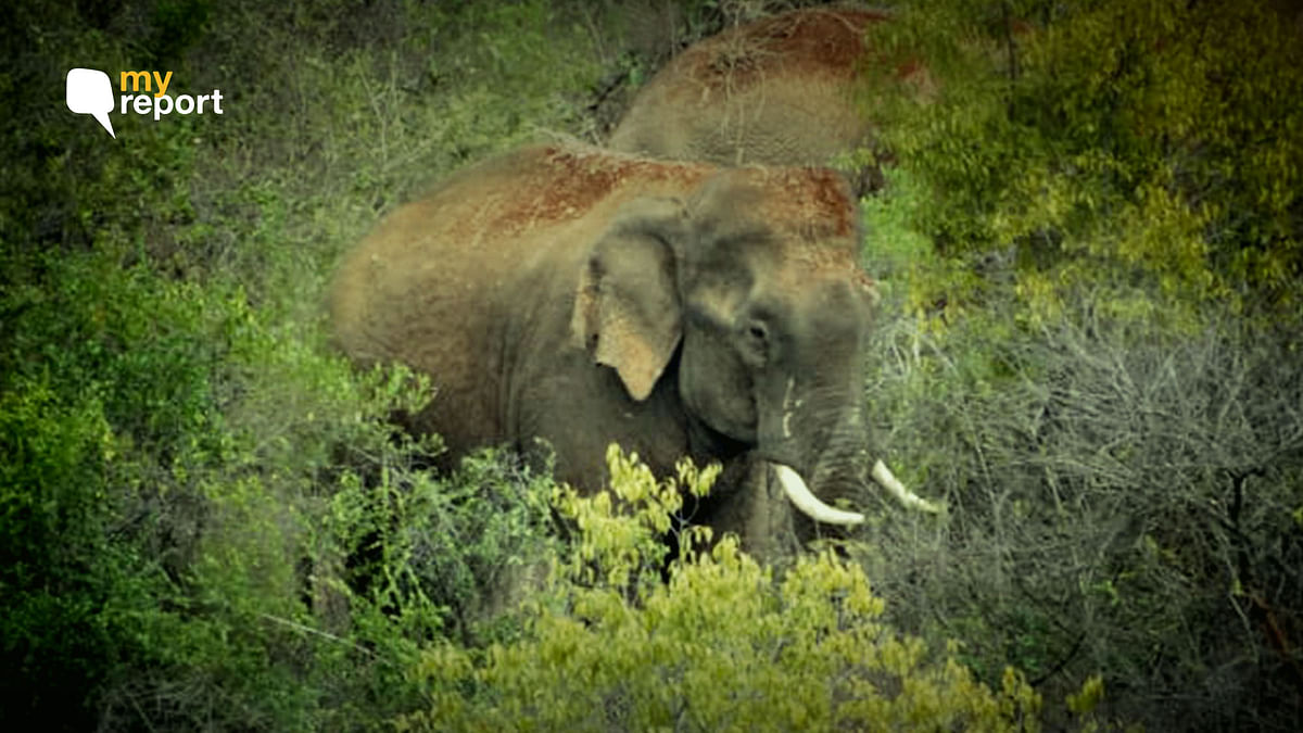 What I Learned From My Face Off With Elephant Rowdy Ranga