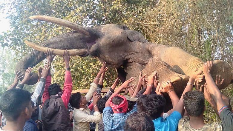 Elephant Dies While Trying to Cross Railway Fence Near Nagarhole