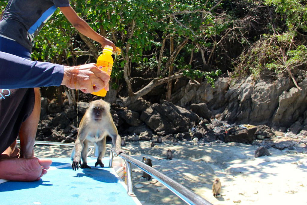 The monkeys at Monkey Bay are awfully clever chaps.