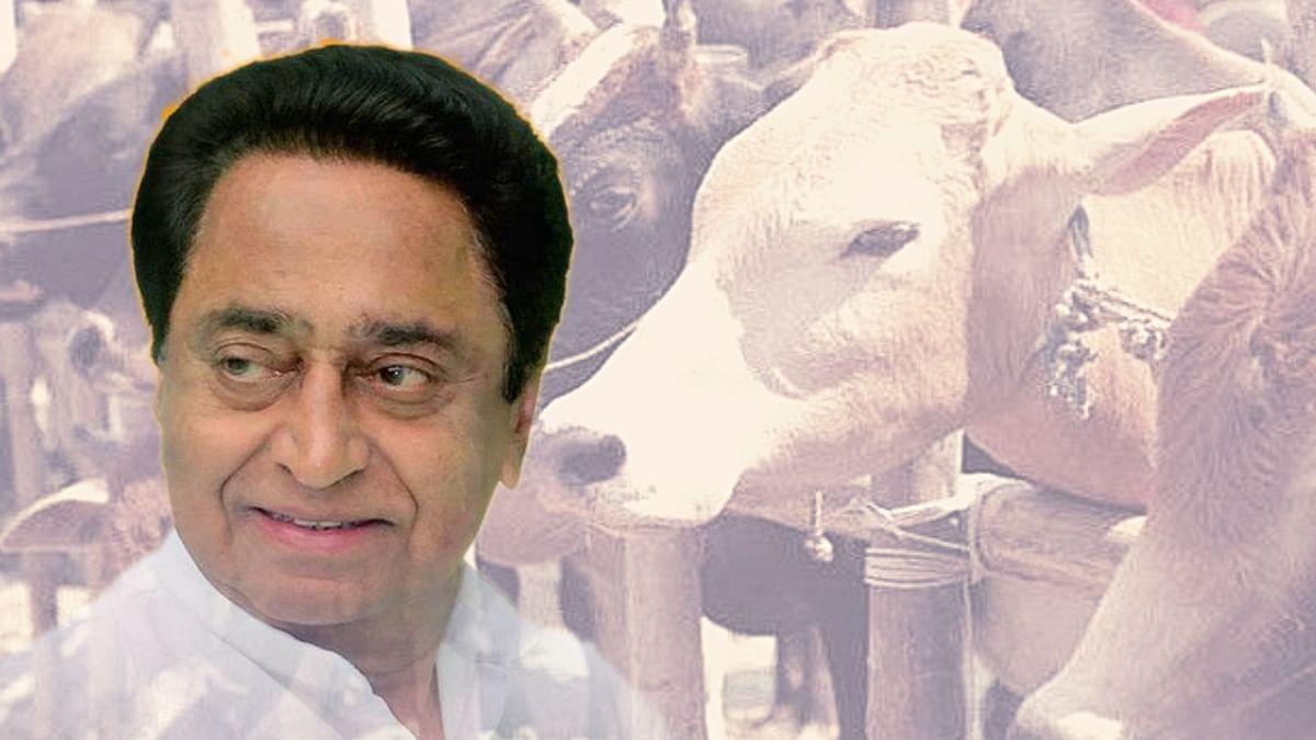 Madhya Pradesh Government Approves Laws Against 'Cow Vigilantism'