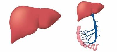 Liver.