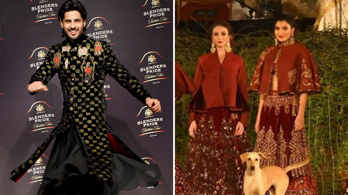 When Sidharth Malhotra Shared the Runway With a Stray Dog