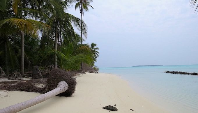 More intense storms lead to the uprooting of coconut trees, a mainstay of Lakshadweep's economy