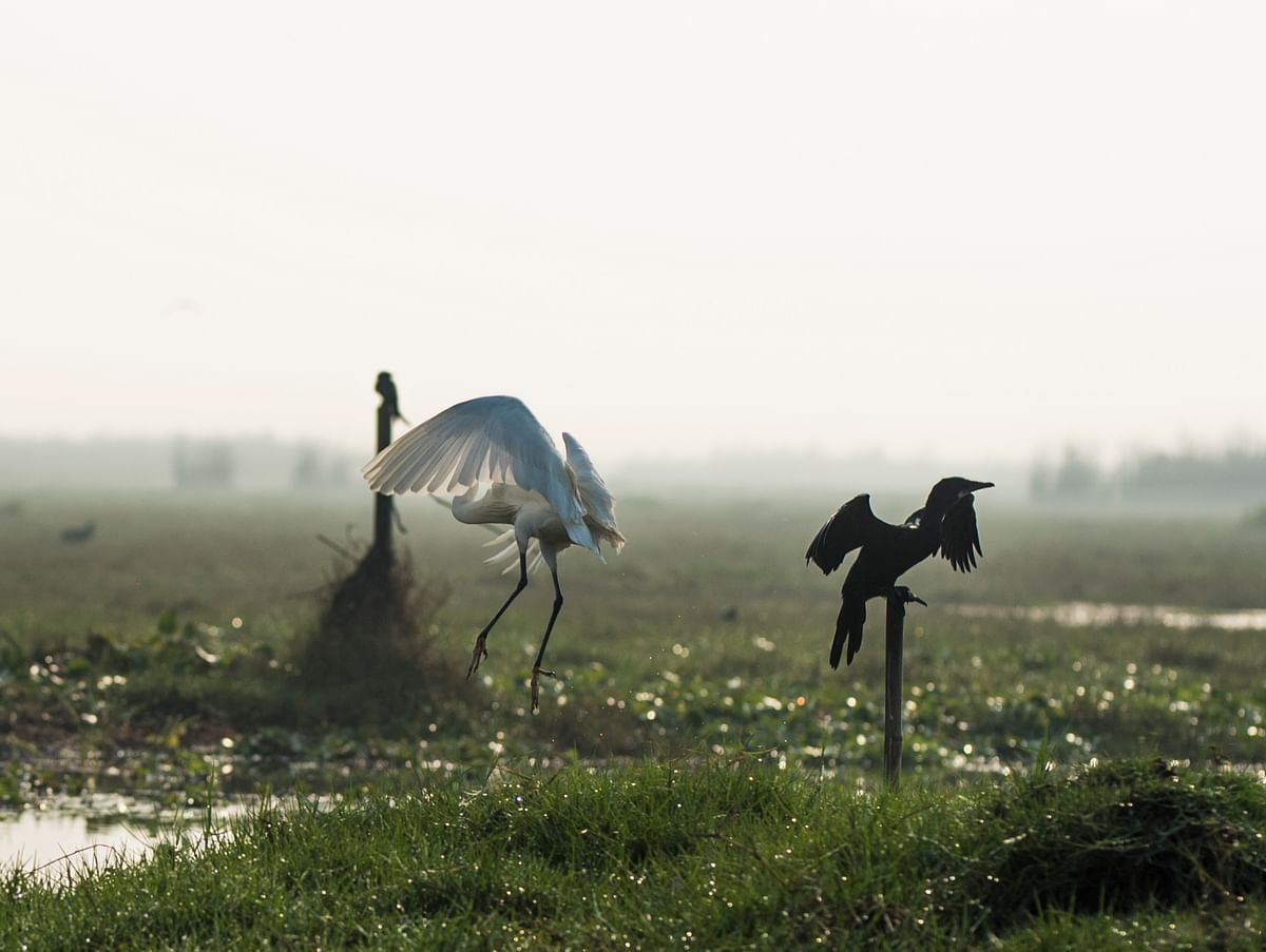 Mangalajodi is a bird lover's paradise.