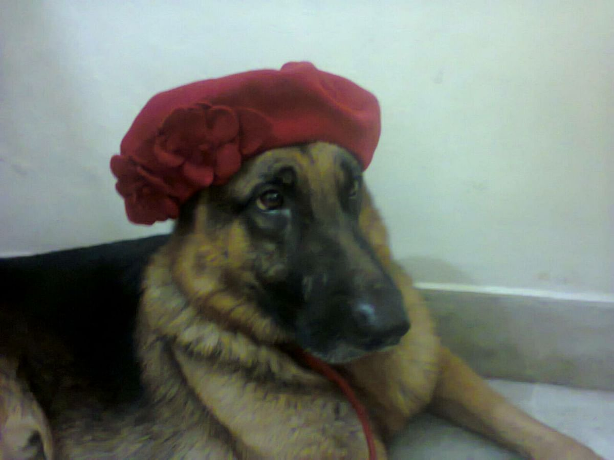 Hachi sports my red beret.