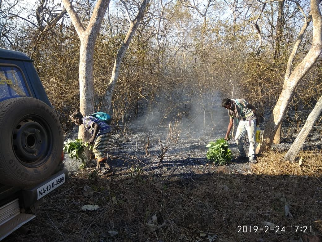 Volunteers use flat brooms to fight the flames, they were not given any equipment.