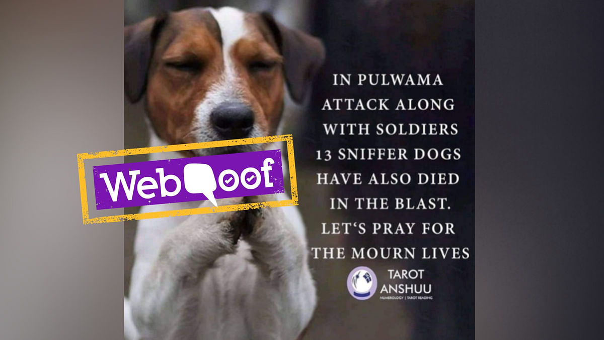 A CRPF official confirmed to The Quint that no sniffer dogs were involved as casualties in the attack.
