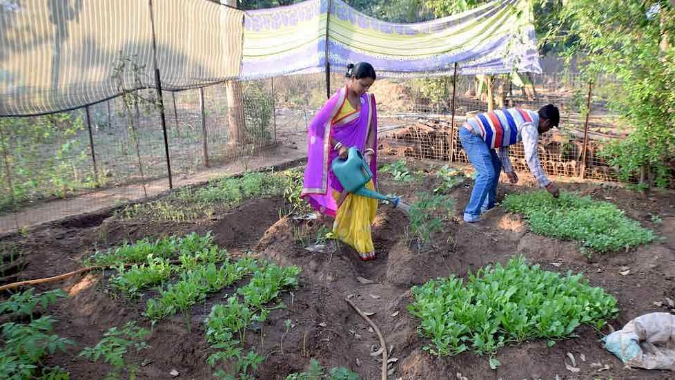 Nutrition gardens, such as the one cultivated by Alladini Bhanda and her husband Ashok in Ratanpur village, supply diverse and nutritious vegetables at no cost.