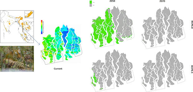 Likely distribution of Bengal tiger in the Bangladesh Sundarbans – (top left) distribution in 2050 with IPCC's RCP6.0 scenario; (bottom left) distribution in 2050 with RCP8.5 scenario; (top right) distribution in 2070 with RCP6.0 scenario; and (bottom right) distribution in 2070 with RCP8.5 scenario. The black borders show the current location of three wildlife sanctuaries.