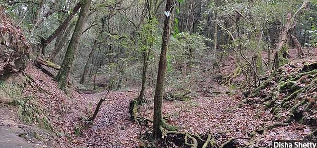 Locals point to the thinned out forest cover even in protected forests like the sacred grove in Mawphlang.