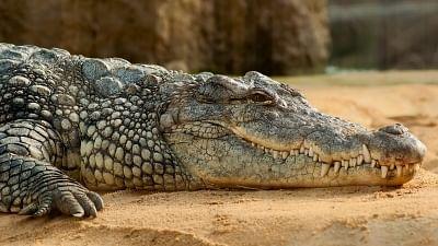 Chennai's Madras Crocodile Bank is struggling to keep afloat amid the coronavirus lockdown.