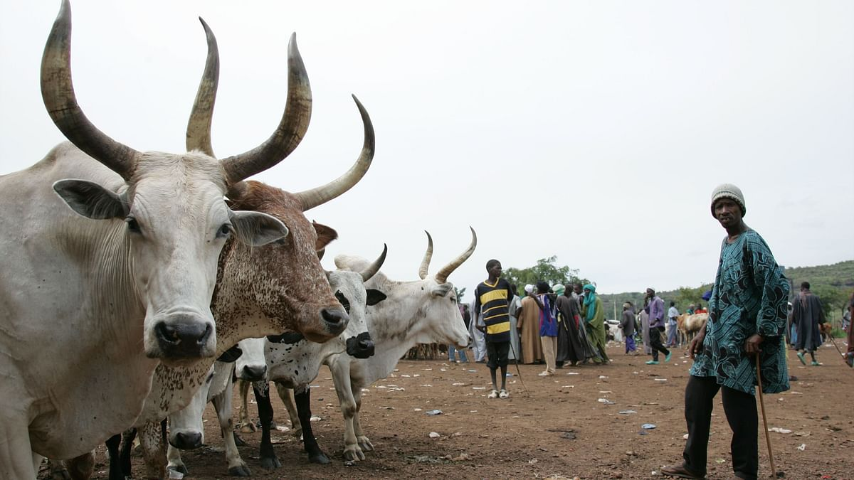 Why Nigeria's Herder-Farmer Conflict Is Spiralling Out of Control