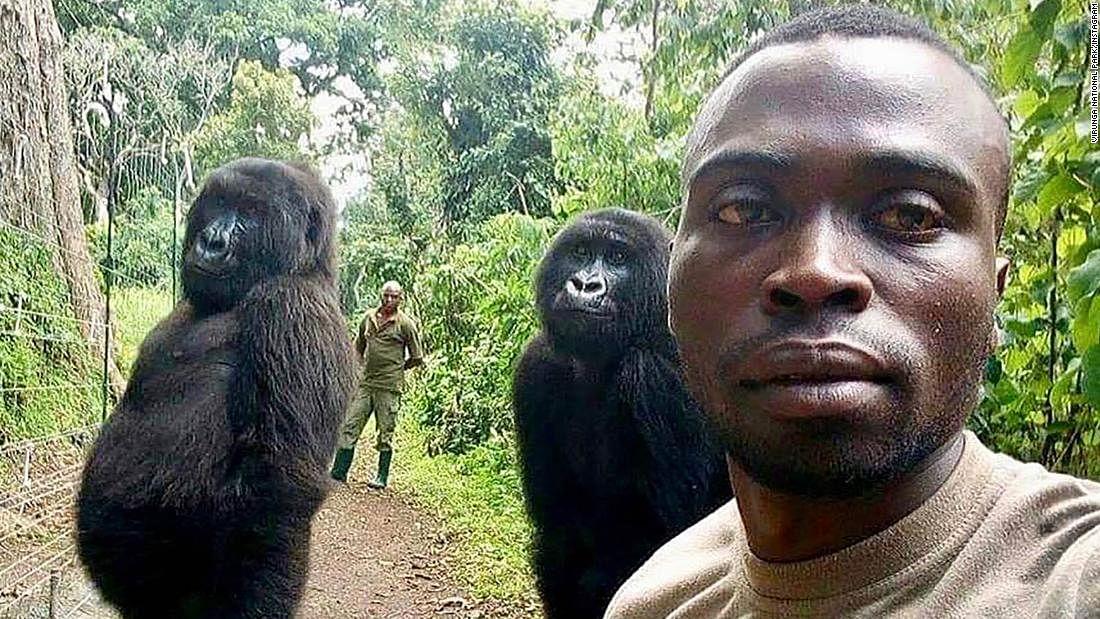 Two Gorillas Posing Like a Boss: That's a Selfie Gone Viral